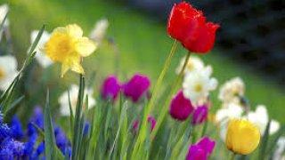 Poemas Frases E Mensagens Sobre Primavera Páginas Luso Poemas