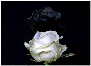 Flores do Silêncio