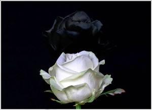 Flores do Sil�ncio