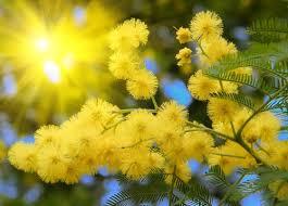 Festejos de primavera