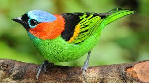 Belo  pássaro